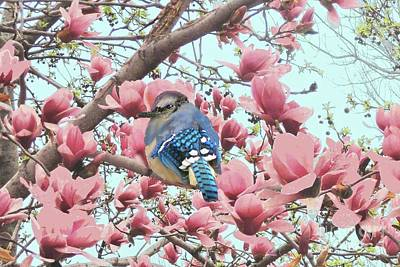 Photograph - Baby Blue Jay In Magnolia Blossoms  by Janette Boyd