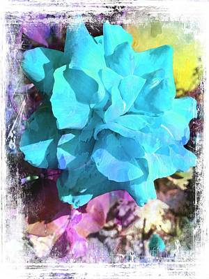 Photograph - Baby Blue by Leslie Hunziker