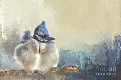 Photograph - Baby Bluejay In Winter by Janette Boyd