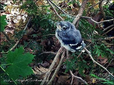 Bluejay Mixed Media - Baby Bluejay by MaryLee Parker