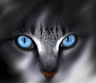 Cat Photograph - Baby Blues by Cecil Fuselier