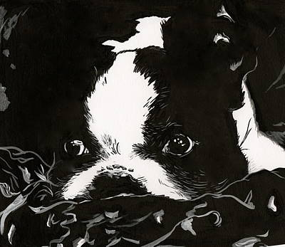 Puppy Mixed Media - Baby Boston Terrier by Julie McDoniel
