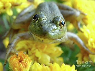 Photograph - Baby Bullfrog   by Rebecca Overton