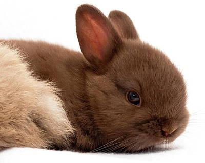 Photograph - Baby Bunny  #03074 by John Bald