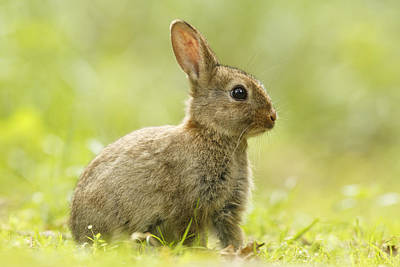 Side View Photograph - Baby Bunny In The Grass by Roeselien Raimond