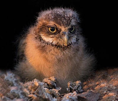 Photograph - Baby Burrowing Cuteness by Sue Cullumber