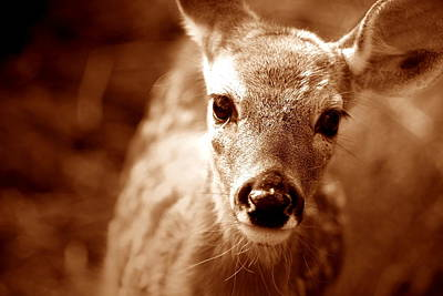 Monster Buck Photograph - Baby Cakes by Emily Stauring