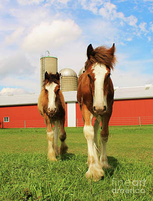 Baby Clydesdale's  Print by Anthony Djordjevic
