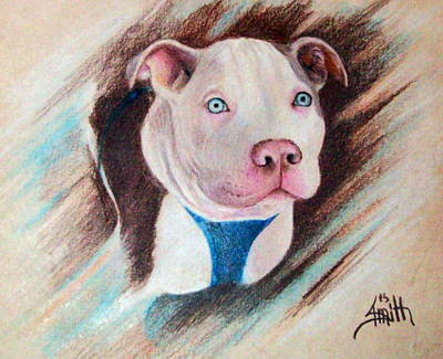 Pitbull Drawing - Baby Darby by Joey Smith