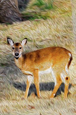 Photograph - Baby Deer Oil by Michelle McPhillips