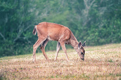 Photograph - Baby Deer Walking On Grass By Forest by Open Range