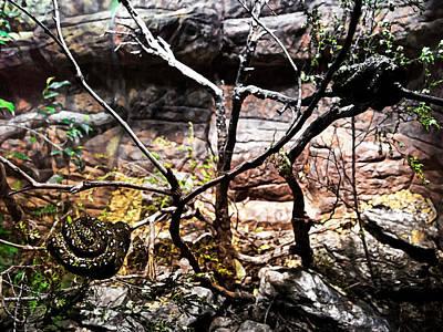 Photograph - Baby Diamond Pythons Home by Miroslava Jurcik