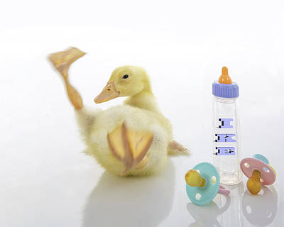 Photograph - Baby Duck Custom Name by Jodi Jacobson
