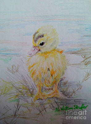 Duck Water Pencil Drawing - Baby Duck by N Willson-Strader