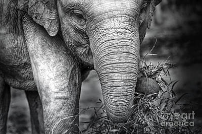Photograph - Baby Elephant 1 by Charuhas Images