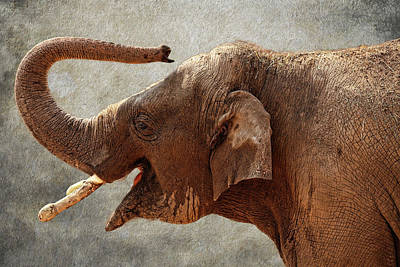 Photograph - Baby Elephant by Judy Vincent