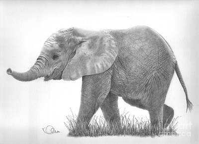 Drawing - Baby Elephant by Karen Townsend