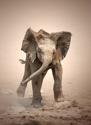 Animals Photos - Baby Elephant mock charging by Johan Swanepoel
