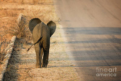 Gravel Road Photograph - Baby Elephant Rear View by Jane Rix