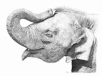 Elephant Pencil Drawing Drawing - Baby Elephant by Remrov