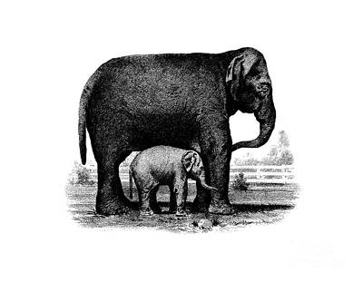 Animals Drawings - Baby Elephant T-shirt by Edward Fielding