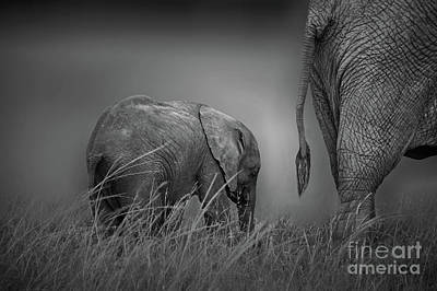 Photograph - Baby Elephant Walking by Charuhas Images