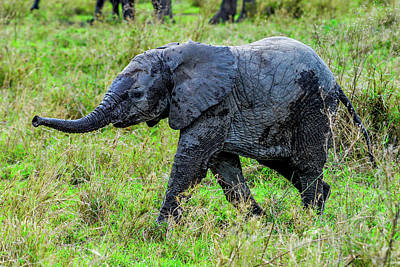 Photograph - Baby Elephant With Raised Trunk by Marilyn Burton