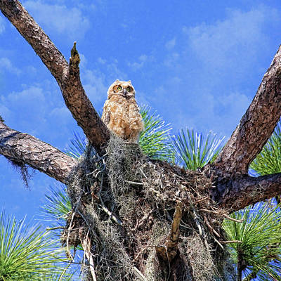 Photograph - Baby Fluff by HH Photography of Florida