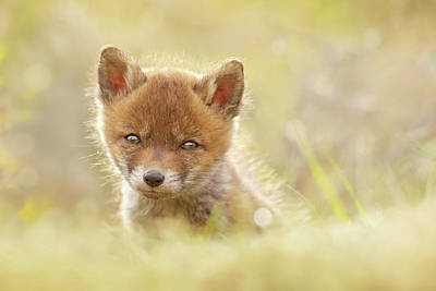 Baby Fox Art Print by Roeselien Raimond