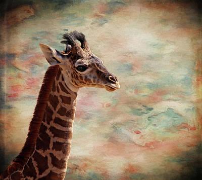 Photograph - Baby Giraffe by Judy Vincent