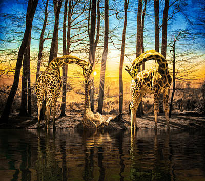 Digital Art - Baby Giraffe's First Sunset by Diane Schuster