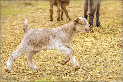 Photograph - Baby Goat On The Run by LeeAnn McLaneGoetz McLaneGoetzStudioLLCcom