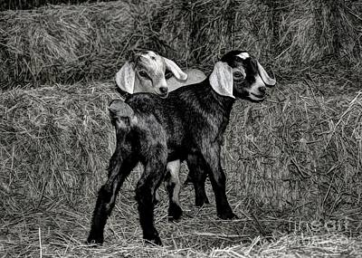 Photograph - Baby Goats On The Hay by Savannah Gibbs