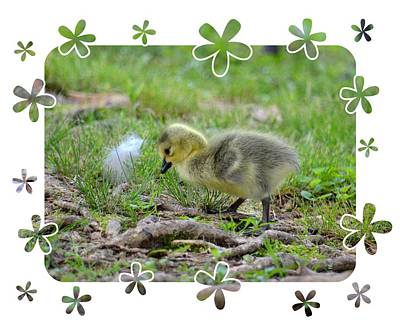 Photograph - Baby Goose by Maria Urso