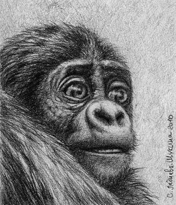 Gorilla Drawing - Baby Gorilla by Svetlana Ledneva-Schukina