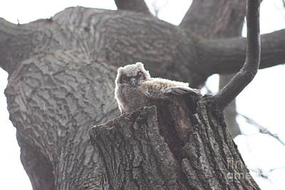 Photograph - Baby Hooter by David Bearden