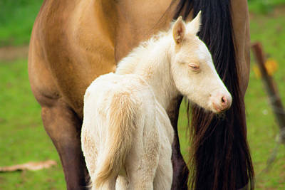 Photograph - Baby Horse By Mom by Tyra OBryant