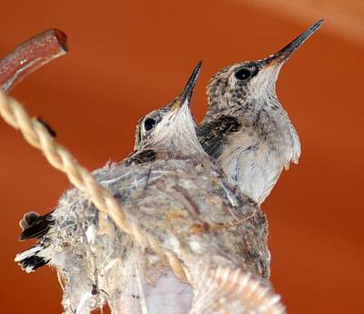 Abstract Graphics - Baby Hummingbirds in Nest by Teresa Stallings