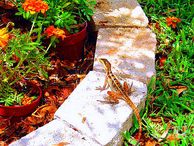 Photograph - Baby Iguana And Marigolds by Merton Allen
