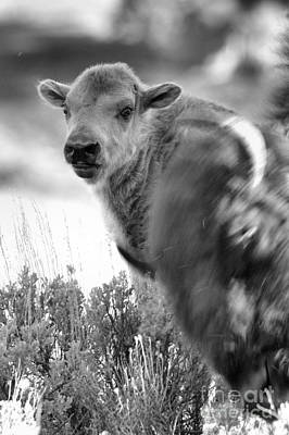 Photograph - Baby In The Background Black And White by Adam Jewell