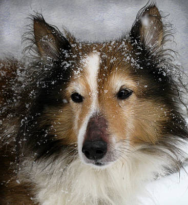 Sheepdog Photograph - Baby It's Cold Outside by Colleen Kammerer