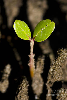 Photograph - Baby Mangrove Shoot by Jorgo Photography - Wall Art Gallery