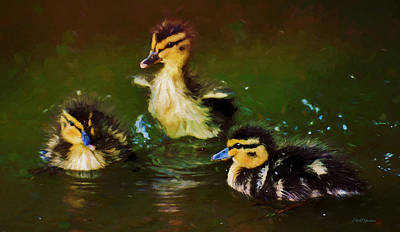 Painting - Baby Mlallard Ducklings - Painted by Ericamaxine Price