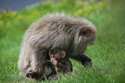 Photograph - Baby Monkey by Jacqi Elmslie
