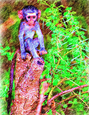 Drawing - Baby Monkey On A Stump - Drawing by Ericamaxine Price