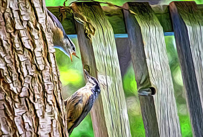 Photograph - Baby Nuthatch 3 - Paint by Steve Harrington