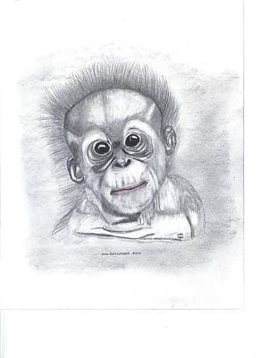 Baby Orangutan Drawing - Baby Orangutan by Don  Gallacher