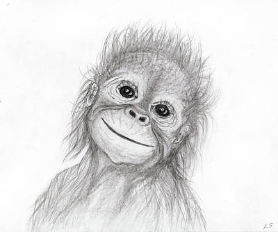 Drawing - Baby Orangutan by Sergey Lukashin