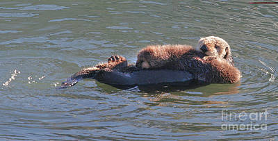 Photograph - Baby Otter And Mom by Michael Rock