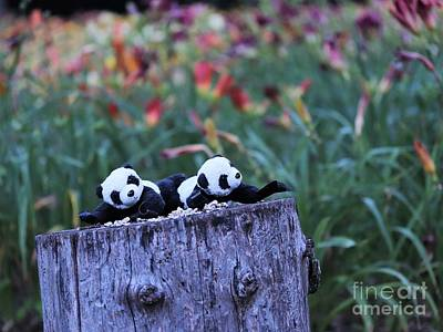 Photograph - Baby Pandas Ginny And Floyd In The Daylilly Patch by Ausra Huntington nee Paulauskaite